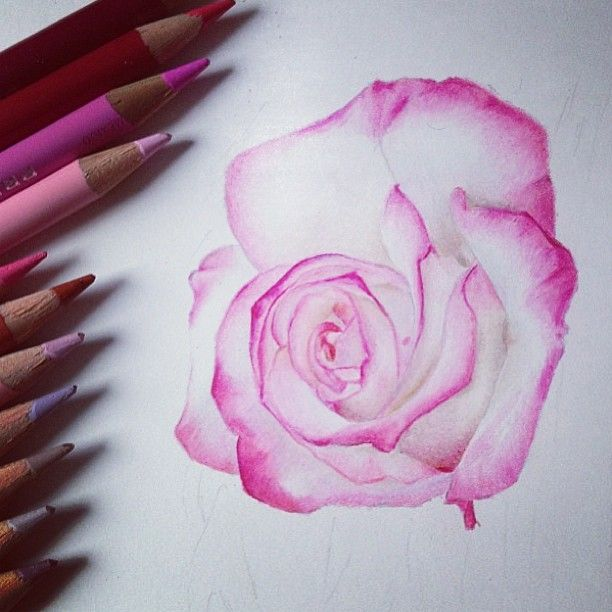 Drawn rose color Pencil Rose on images this