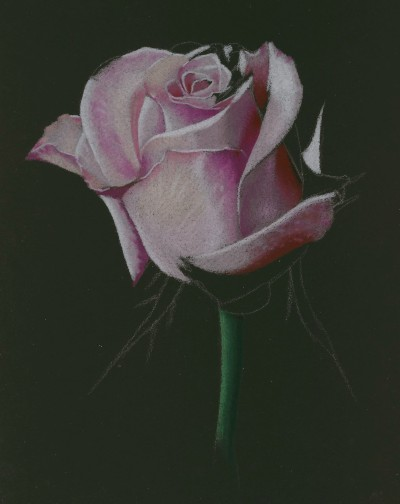 Drawn rose colored pencil Draw Drawing drawing to How