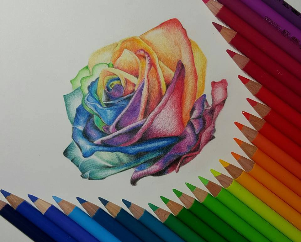 Drawn rose colored pencil Artists Pencil the artists around