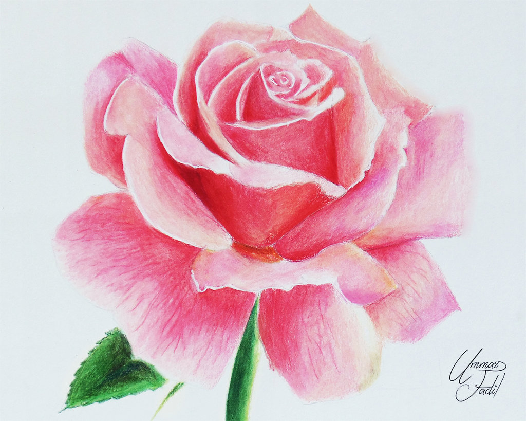 Drawn rose colorful flower I by 1 on f