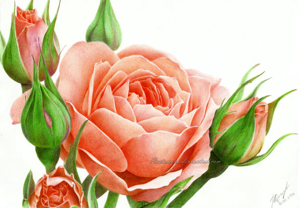 Drawn rose colorful flower And rustamova flower from Stunning