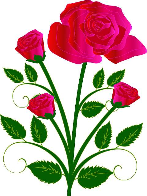 Drawn rose colorful flower Blog draw drawing to a
