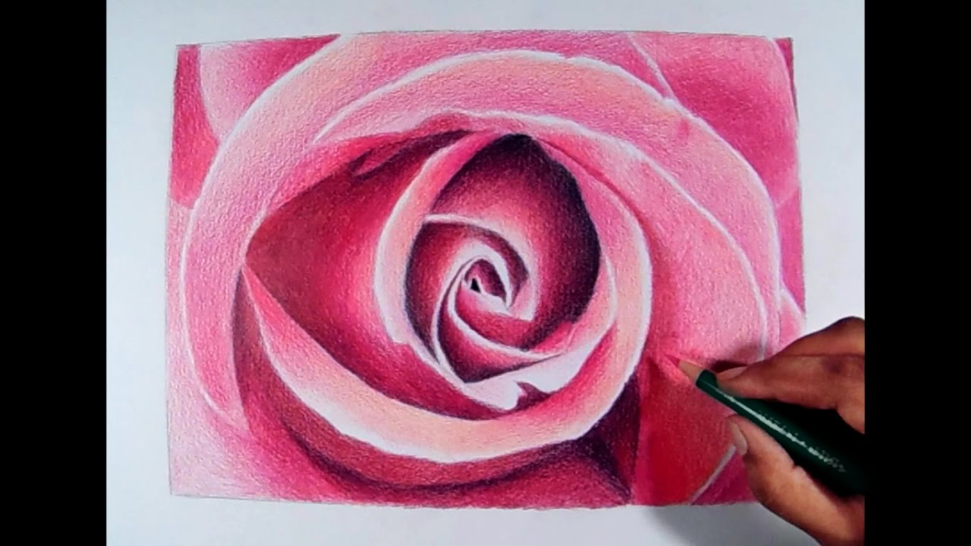 Drawn rose colorful flower Drawings fadil Drawing Pencil and