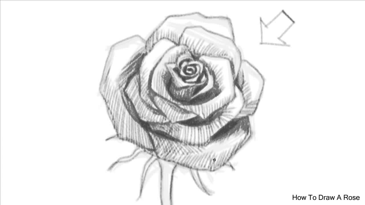 Drawn rose computer Rose Rose to a an