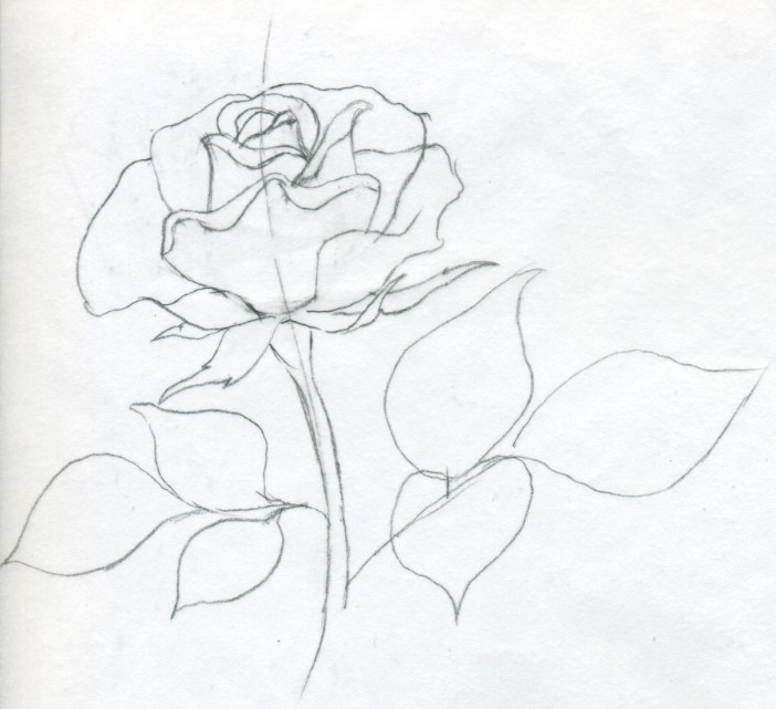 Drawn rose contour drawing Easily This Draw a Rose