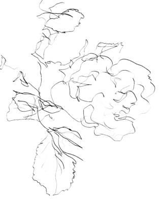 Drawn rose contour drawing Rose Line Drawing S+ART contour