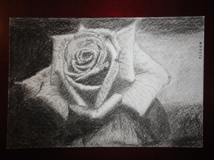 Drawn rose contrast Physician more The study rather