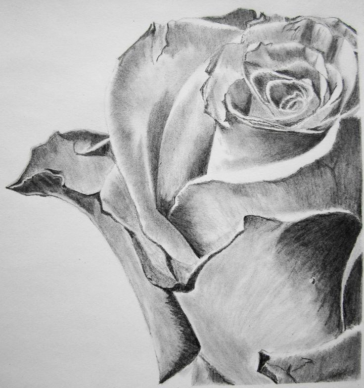 Drawn rose contrast To Find on Pinterest this