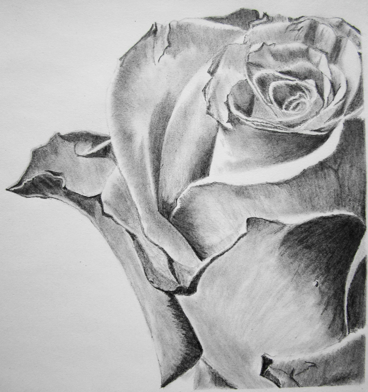 Drawn rose contrast Beautiful 10+ Inspiration Beautiful art