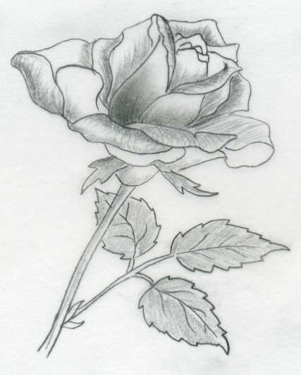 Drawn rose creative Sequence images side? one all