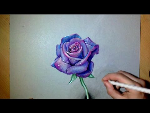 Drawn red rose real rose I Purple draw How realistic