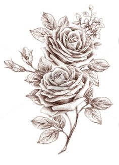 Drawn rose creative Tang and drawing Freehand Beautiful