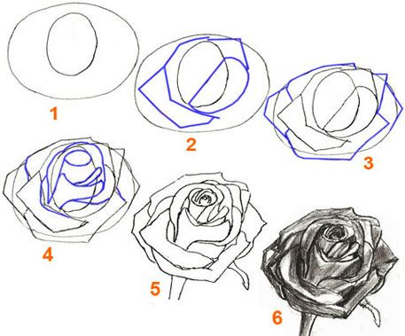 Drawn rose detail drawing Pinterest ideas draw Rose step