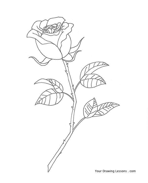 Drawn rose detail drawing Is  This draw to