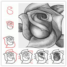 Drawn rose detail drawing  your to how a