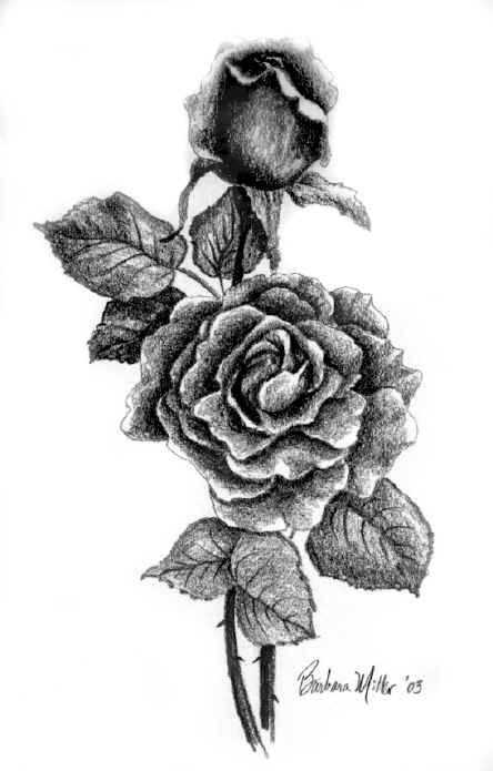 Drawn rose detail drawing Pinterest (Paper best Miller The