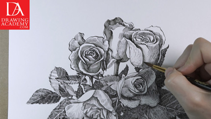 Drawn rose detail drawing Drawing Video Tutorials Lessons by