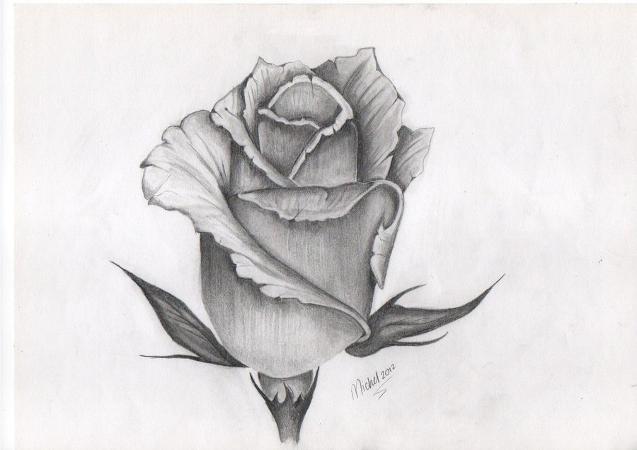 Drawn rose detailed Download WALLPAPERS Clip on Clip