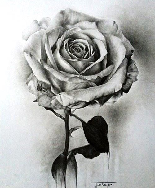 Drawn rose detailed Shades drawing ideas DrawingsRose are