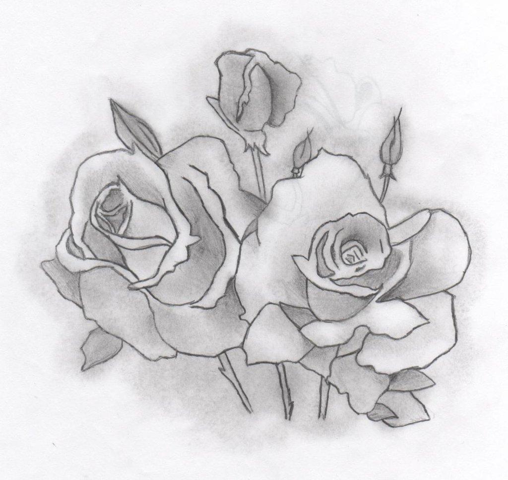 Drawn rose deviantart Drawn Roses xoxsportsloverxox xoxsportsloverxox Drawn