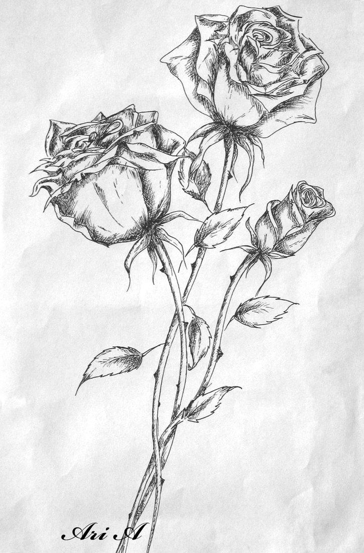 Drawn rose deviantart Of Roses x Butterflies Of