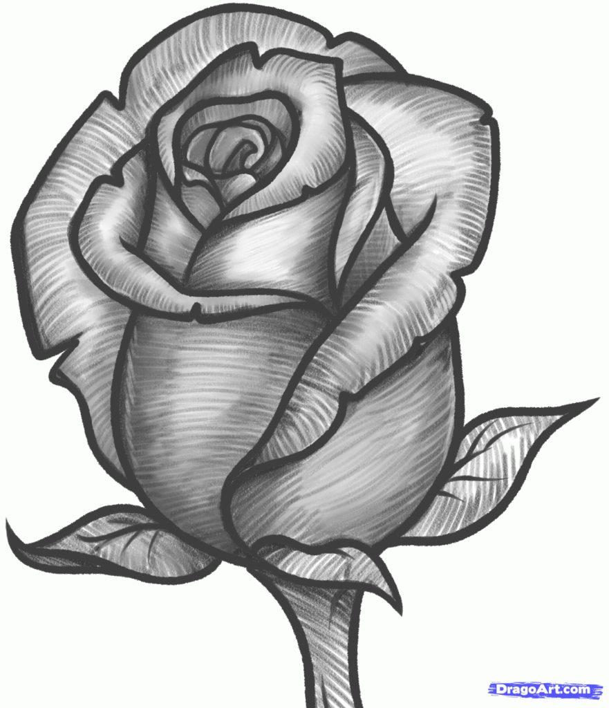 Drawn rose deviantart Drawn Rose Draw To Drawn