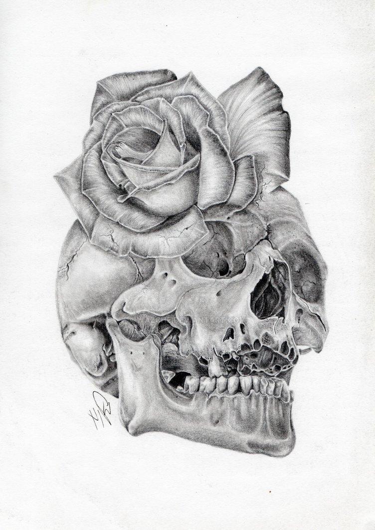 Drawn rose deviantart Rose morph Rose pencil by