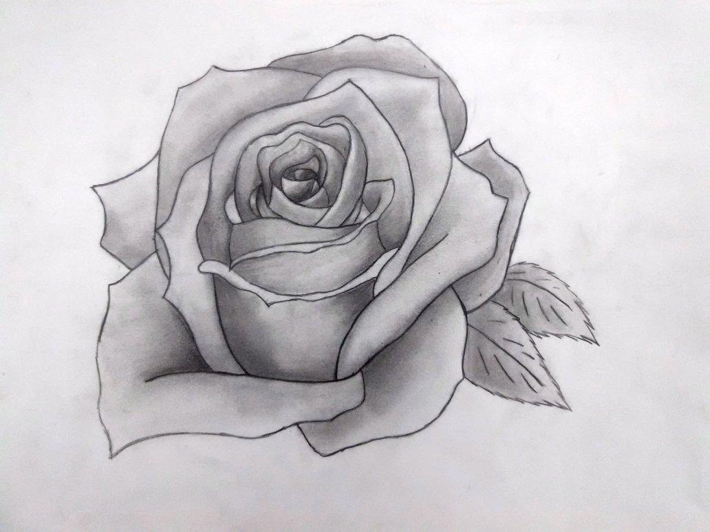 Drawn rose deviantart Drawn Rose Pichumiku3 Pichumiku3 Drawn