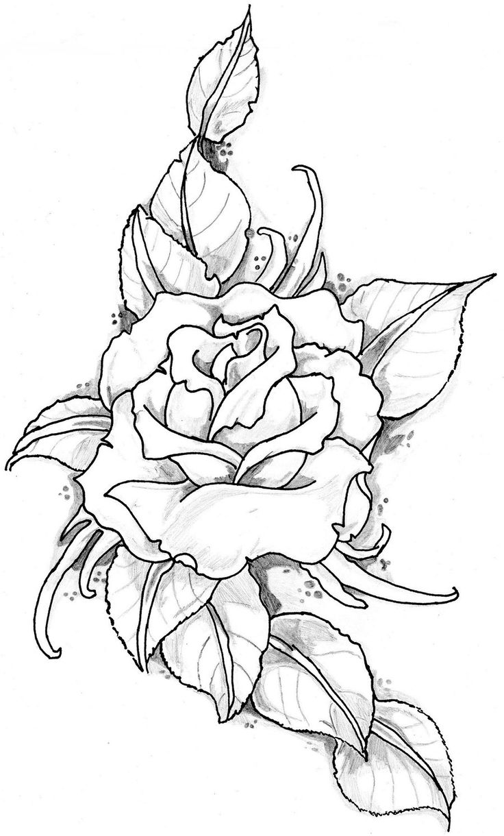 Drawn rose different flower 2012 tatto on traditional art
