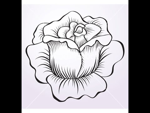 Drawn rose different flower Rose How to Draw a