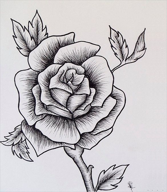 Drawn rose detailed On Best draw  Pinterest