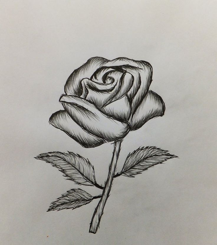Drawn rose draw a Drawing Easy rose rose on