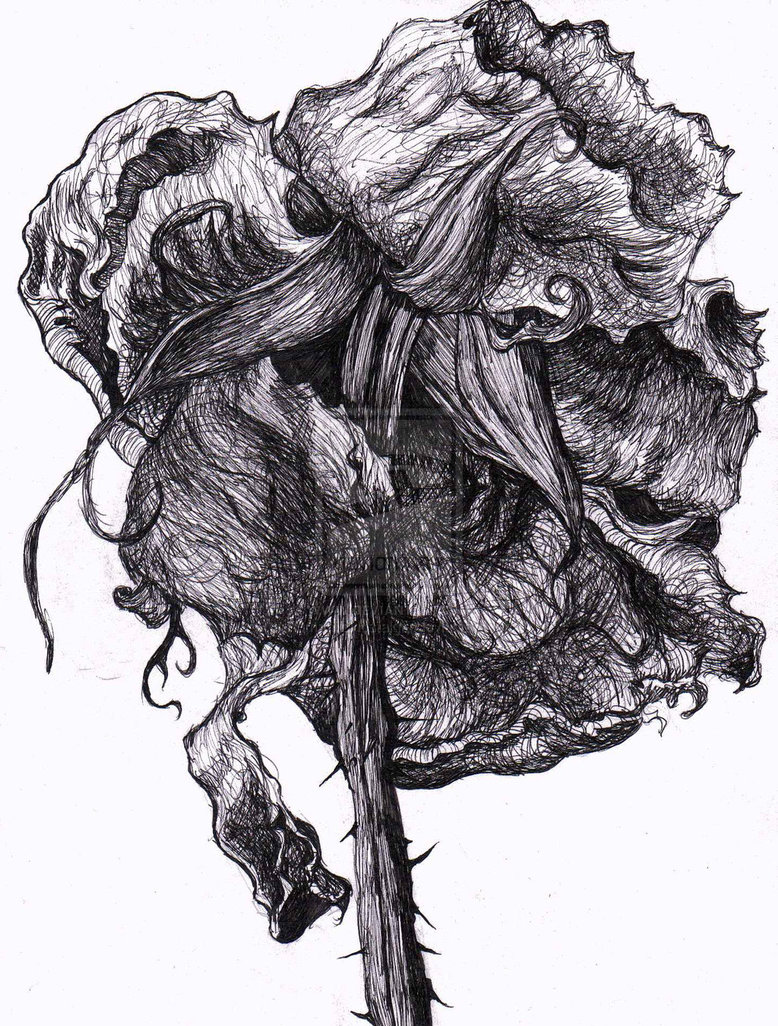 Drawn rose drawing dead Wilting decaying drawn Portraits Search