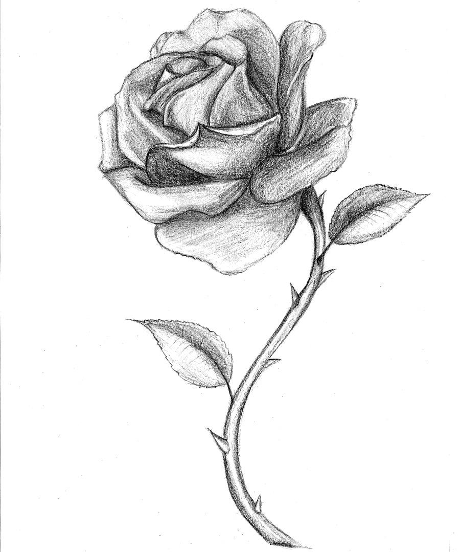 Drawn rose drowing Rose Drawn 2  Bud