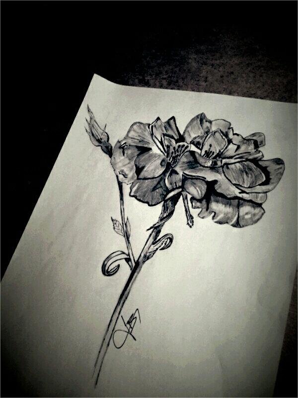 Drawn rose drowing 20+ Drawing Rose Free AI