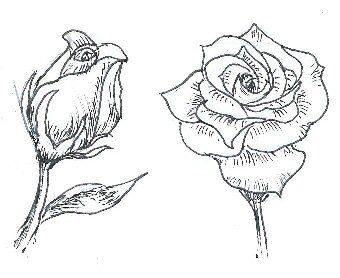 Drawn rose drowing How note they images 40