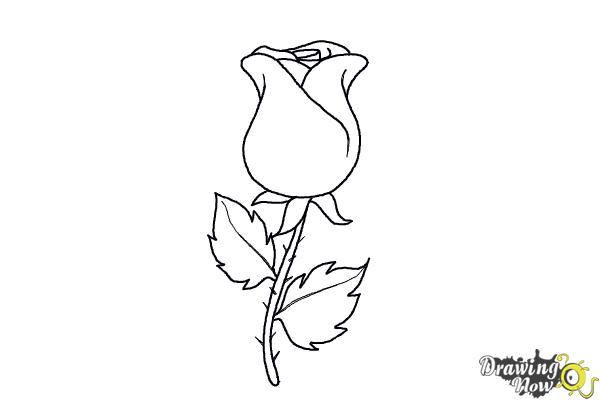 Drawn rose easy 7 Pages A Drawing Rose