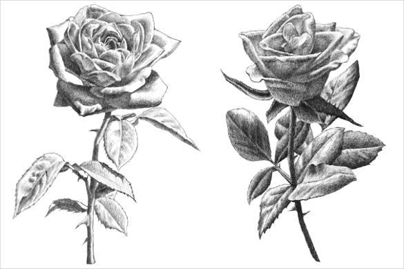 Drawn rose emo 27+ PSD Templates Rose Roses