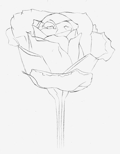 Drawn rose fancy Is Draw Rose a How