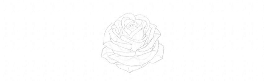Drawn rose fancy Petals rose how Draw How