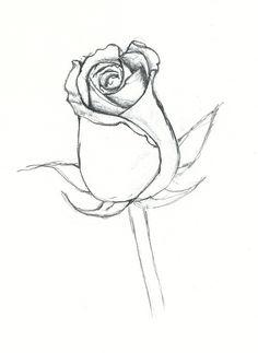Drawn rose full Beautiful Pictures Drawings com