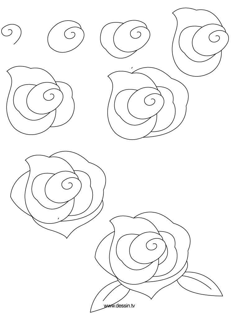 Drawn rose bush step by step flower Rose learn by to how