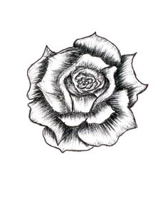 Drawn rose full By Roses Drawing By How