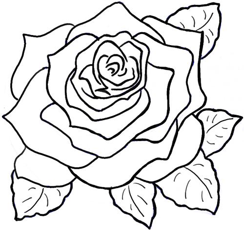 Drawn rose full To Roses Roses in How