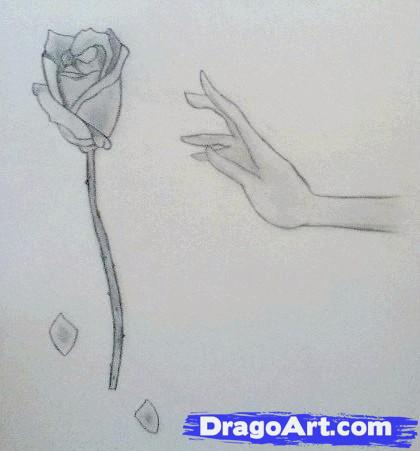 Drawn rose hand holding A Hand Rose Step draw