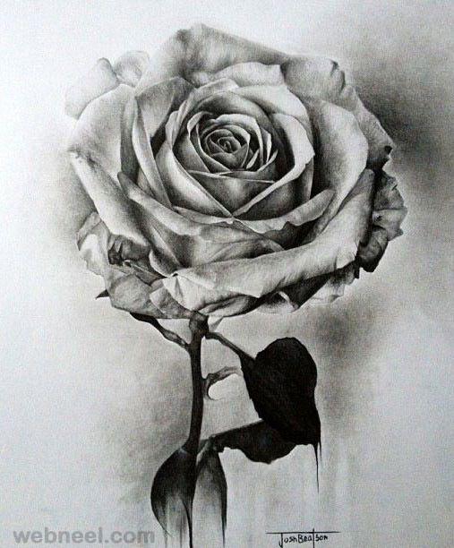 Drawn rose hard On