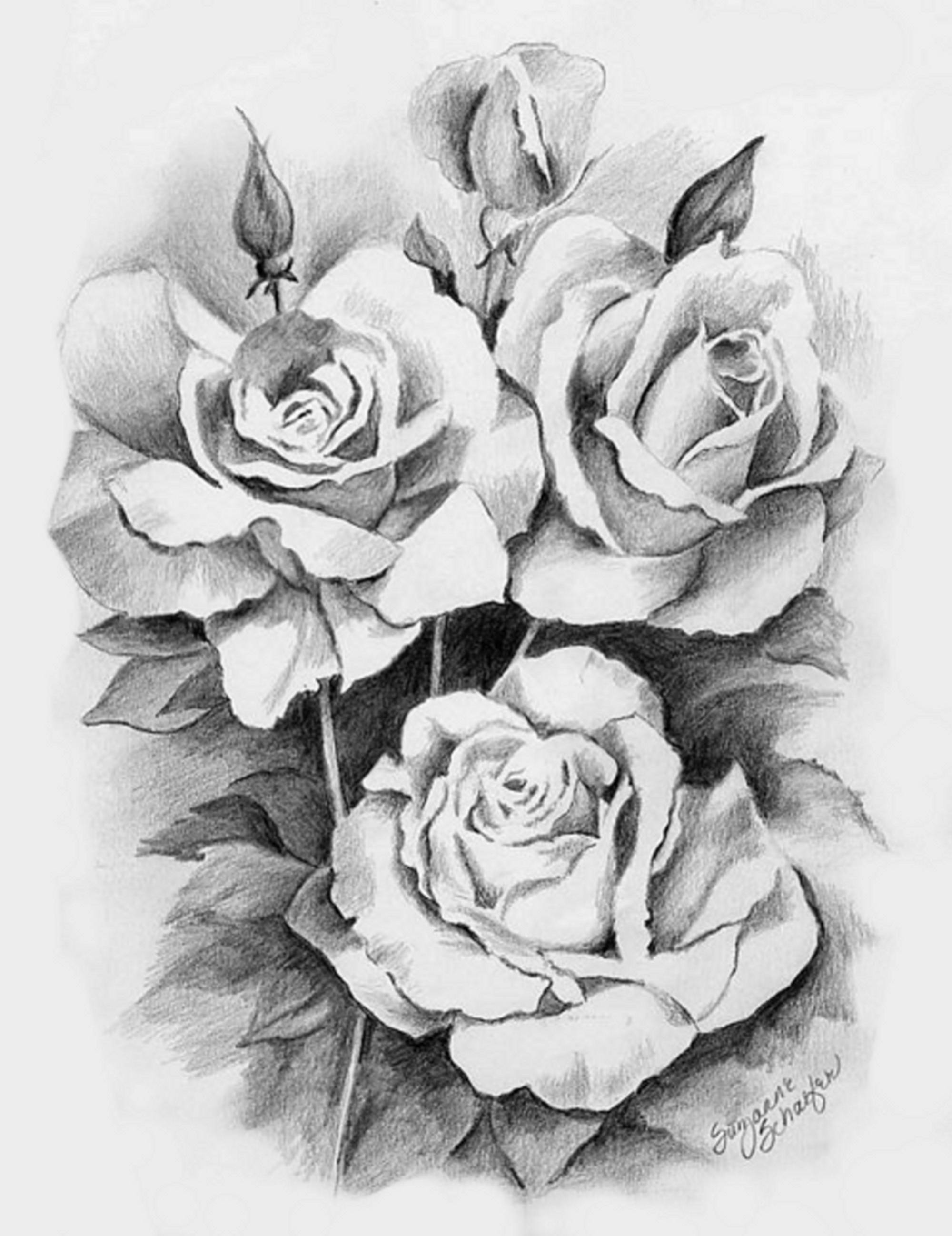 Drawn rose hard Pencil Flower Realistic Drawings Color
