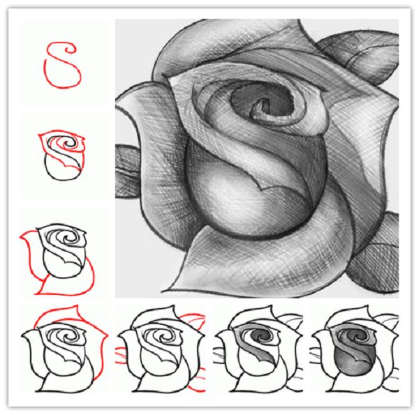 Drawn rose hard How Best to 25+ draw