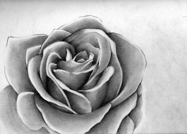 Drawn rose hard 10+ Inspiration rose 12 images