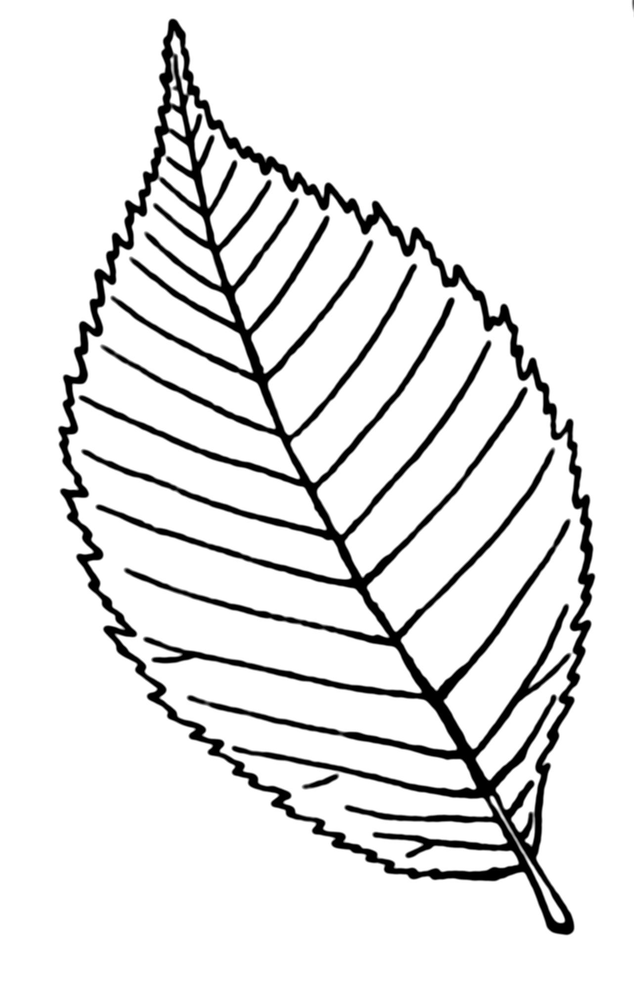 Drawn rose leaves Description Google leaves png free